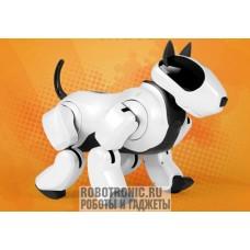 Аренда роботов: собака робот Genibo